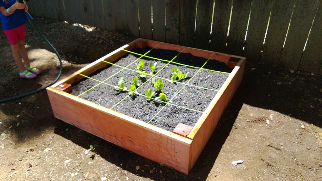 Square foot garden after planting